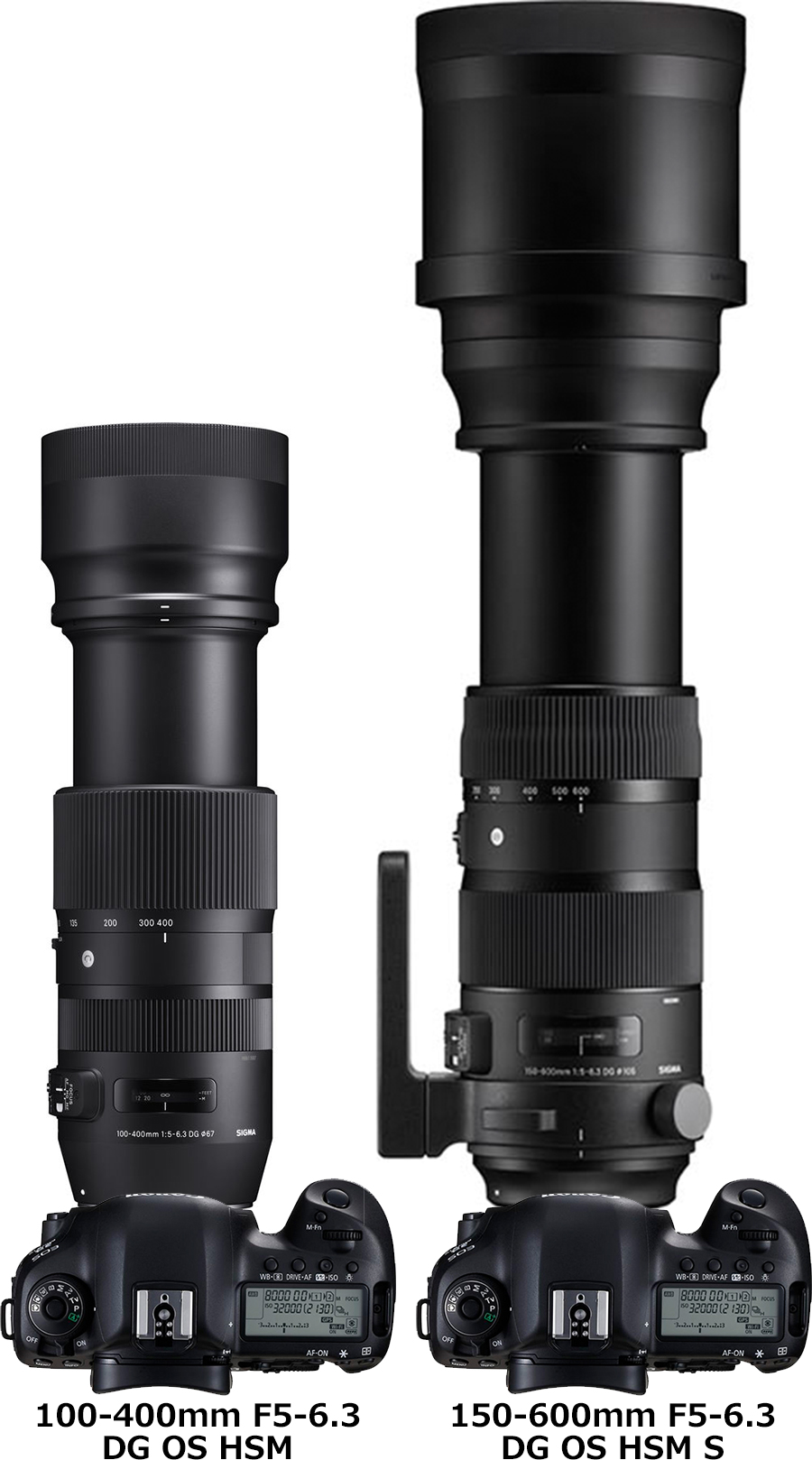 シグマ「100-400mm F5-6.3 DG OS HSM | Contemporary」と「150-600mm F5-6.3 DG OS HSM | Contemporary/Sports」 3