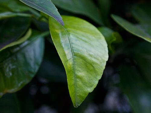 葉っぱ 1の高画質画像
