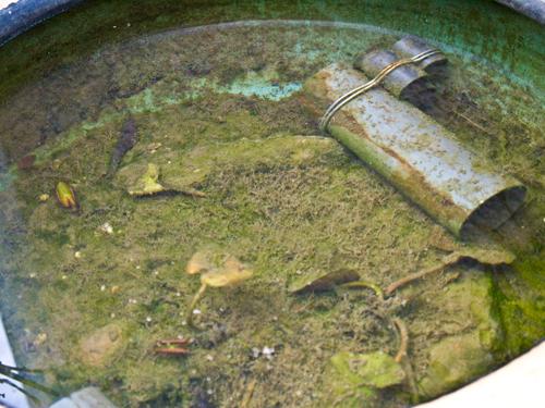 水溜りの中の高画質画像