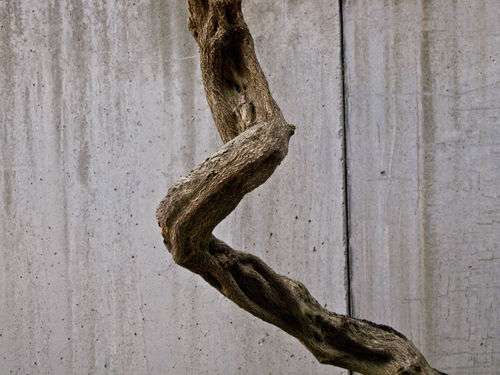 うねった木の高画質画像