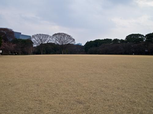 皇居の芝 4の高画質画像