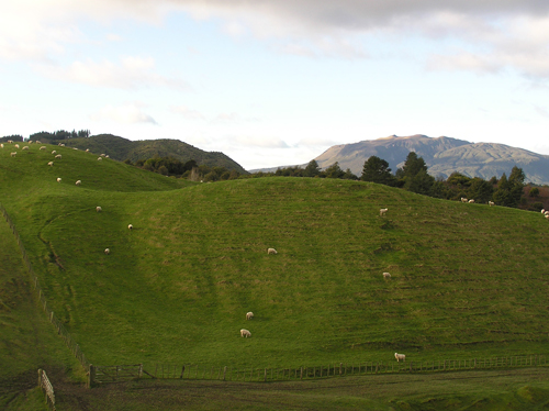 ニュージーランドの羊 2の高画質画像