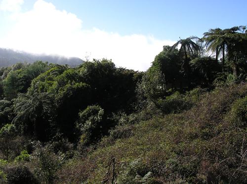 ニュージーランドの自然 2の高画質画像