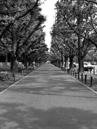 銀杏並木 2の高画質画像