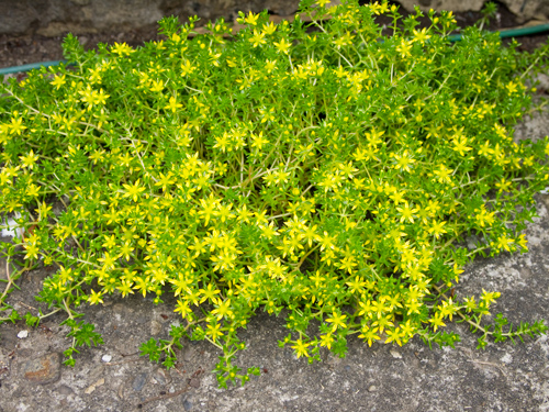 黄色い花 2の高画質画像