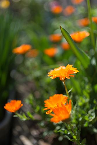 花壇の花 1の高画質画像