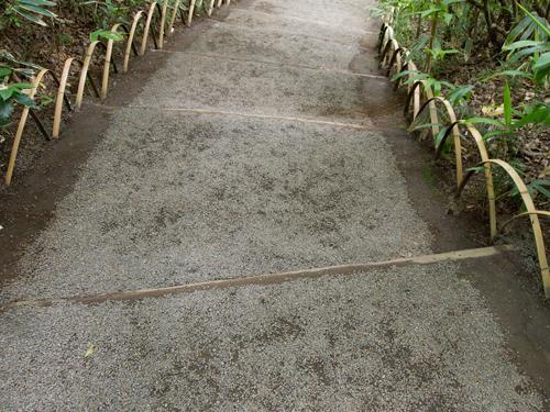 明治神宮の御苑 2の高画質画像