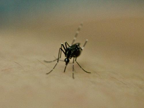蚊 2の高画質画像