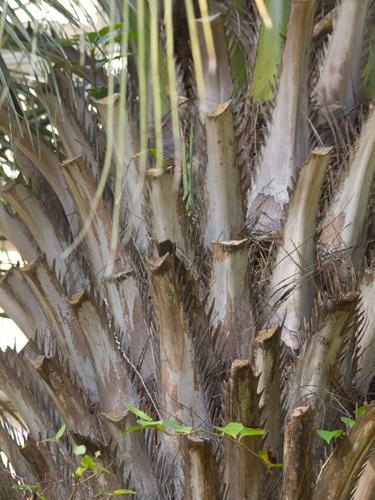 南国の植物 1の高画質画像