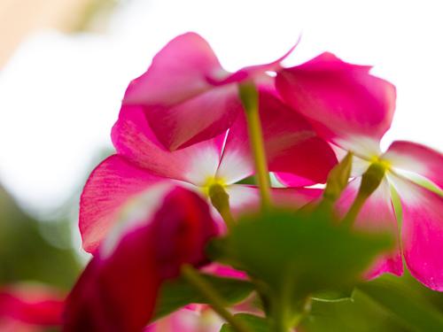 花 26の高画質画像