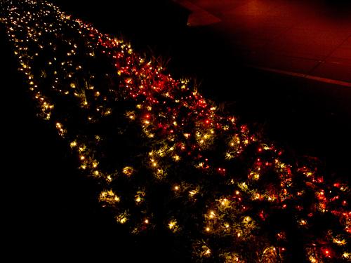 クリスマスイルミネーション 8の高画質画像