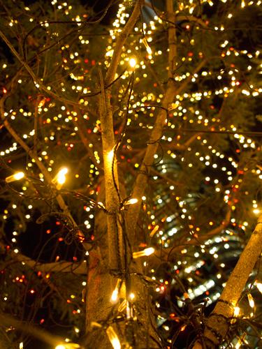 クリスマスイルミネーション 19の高画質画像