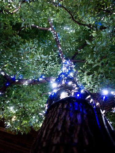 クリスマスイルミネーション 23の高画質画像