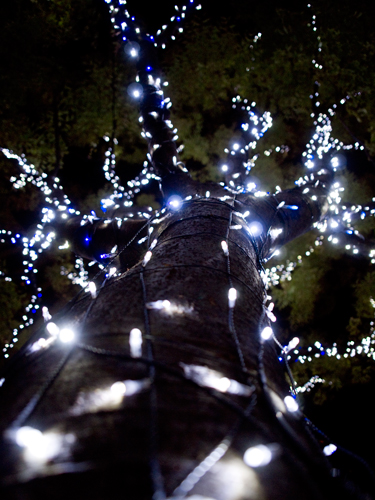 クリスマスイルミネーション 28の高画質画像