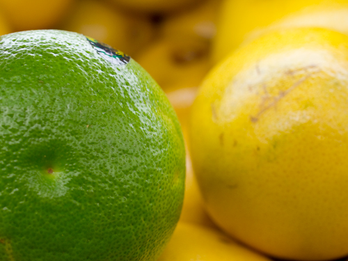 グレープフルーツの高画質画像