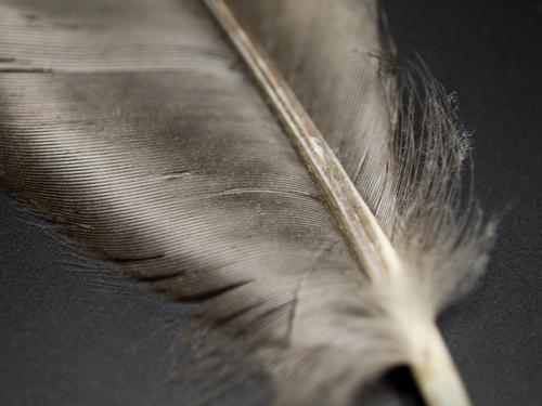 カラスの羽根 1の高画質画像