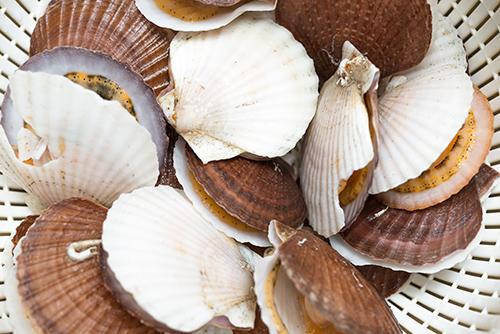 帆立貝 ほたてがい 1の高画質画像