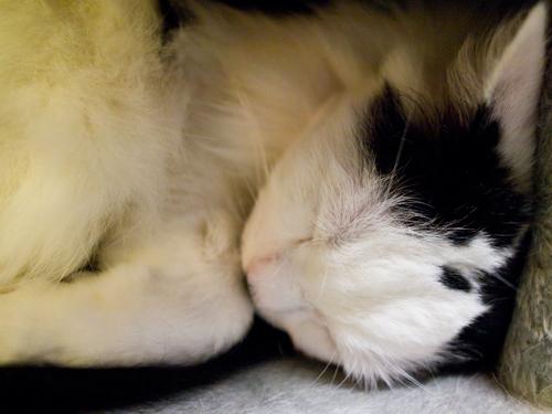 眠り猫 1の高画質画像