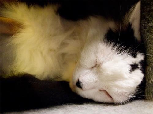 眠り猫 5の高画質画像