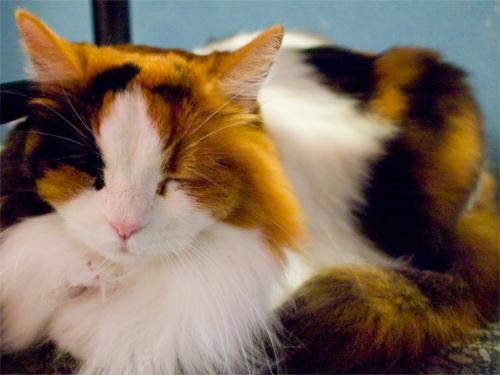 眠り猫の高画質画像