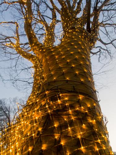 装飾された木の高画質画像