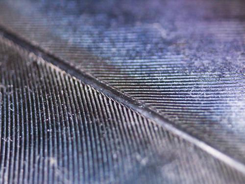 カラスの羽根 2の高画質画像