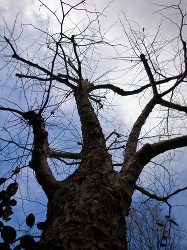 木の高画質画像