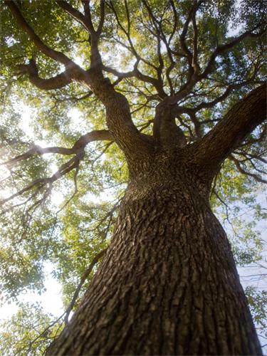 巨大な木 2の高画質画像
