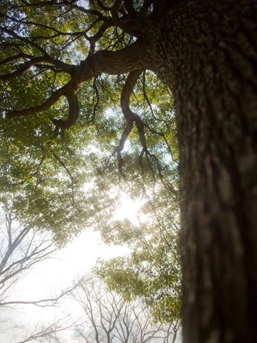 巨大な木 4の高画質画像