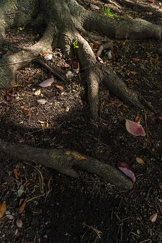木の幹の高画質画像