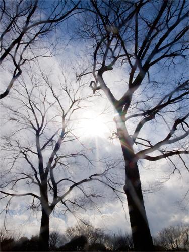 木と青空 5の高画質画像
