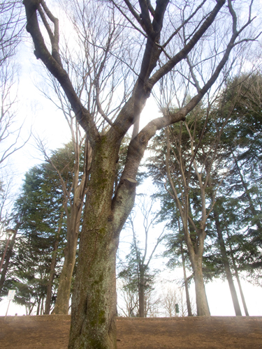 石神井公園 11の高画質画像
