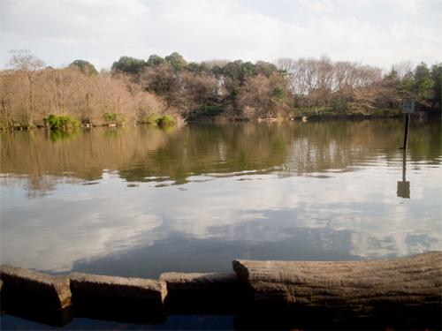 石神井公園 15の高画質画像