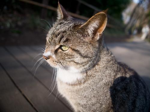 猫の高画質画像