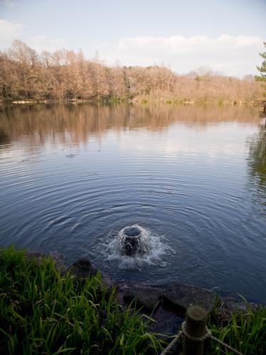 石神井公園の湧き水の高画質画像