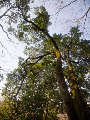 石神井公園の森林 2の高画質画像