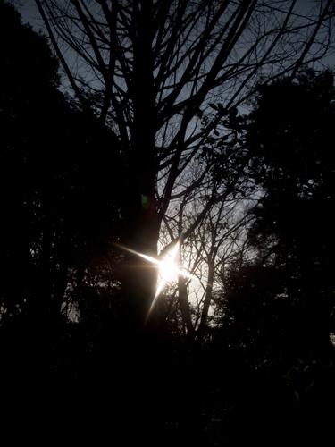 石神井公園の森林の高画質画像