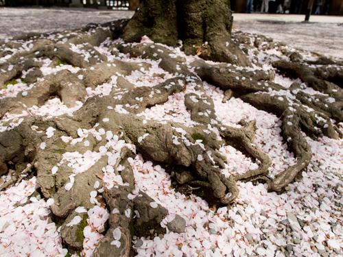 靖国神社 13の高画質画像