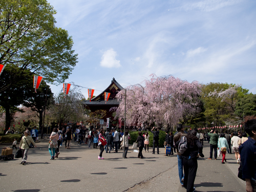 寛永寺清水観音堂、上野公園 1の高画質画像