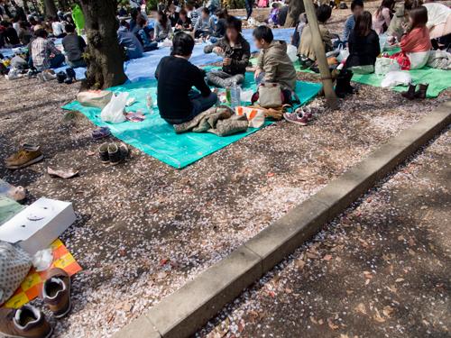 花見、上野公園の高画質画像