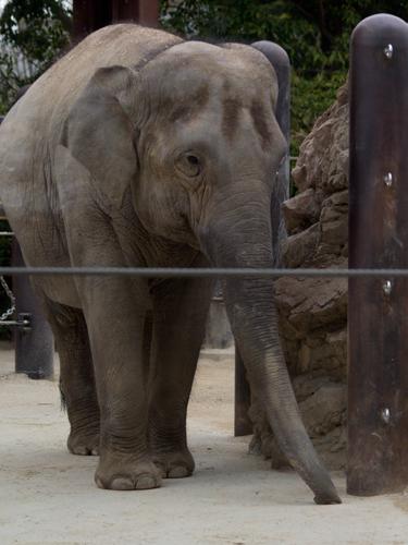 象の高画質画像