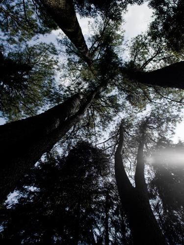 神代植物公園 4の高画質画像