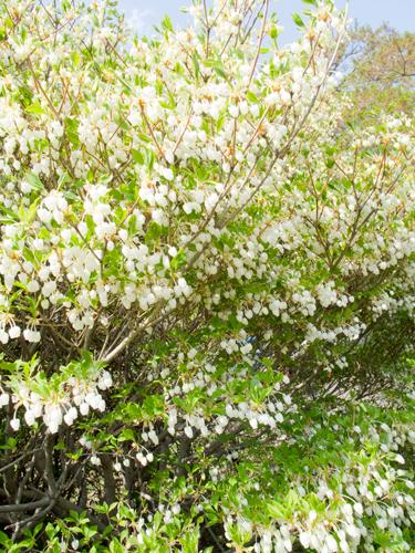 神代植物公園 8の高画質画像