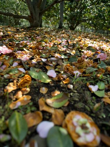 神代植物公園の森林 4の高画質画像