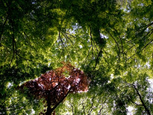 神代植物公園の森林 5の高画質画像