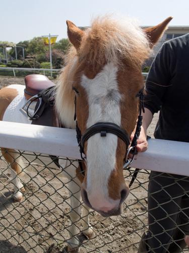馬事公苑の馬 5の高画質画像