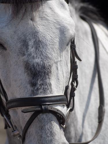 馬事公苑の馬 6の高画質画像