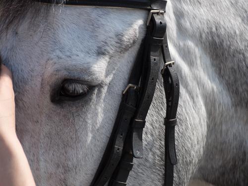 馬事公苑の馬 9の高画質画像