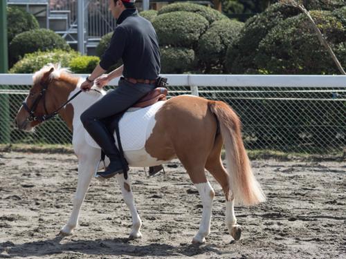 馬事公苑の馬 13の高画質画像