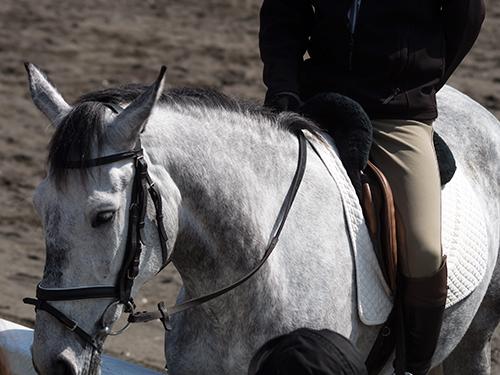 馬事公苑の馬 16の高画質画像